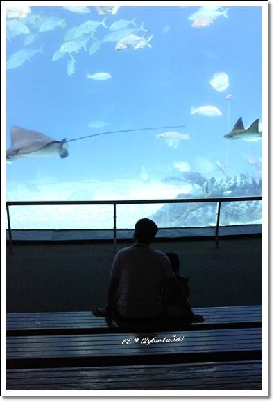 父女依偎看魚.jpg