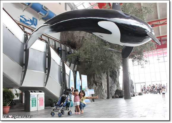 剛進館上頭有大鯨魚.jpg