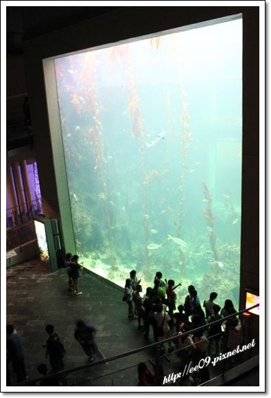 跨樓層大水族箱.jpg