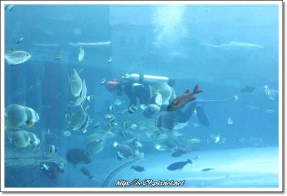 潛水伕餵魚.jpg