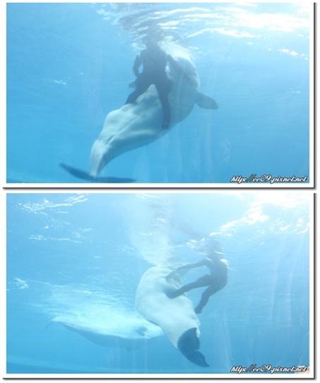 餵小白鯨兩圖.jpg