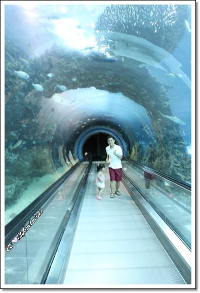 難得淨空的海底隧道.jpg