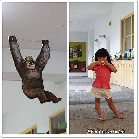 學猩猩扮鬼臉