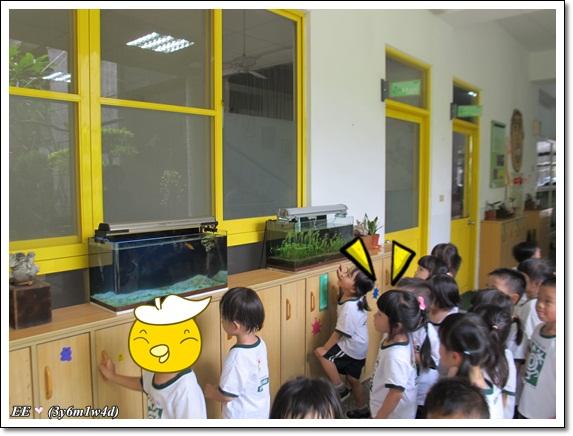 0904看看校園裡的魚缸(縮)