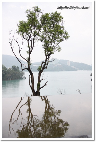 向山湖景樹倒影