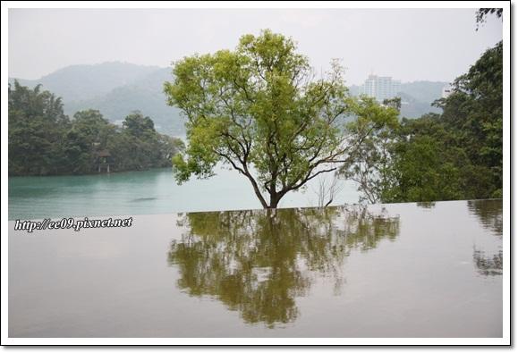 湖景樹倒影