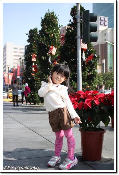 EE與耶誕紅