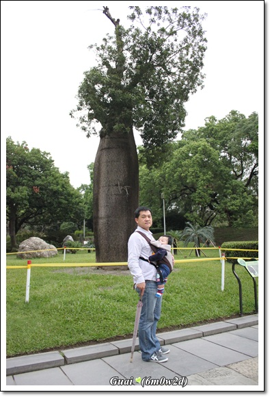 父子與瓶樹
