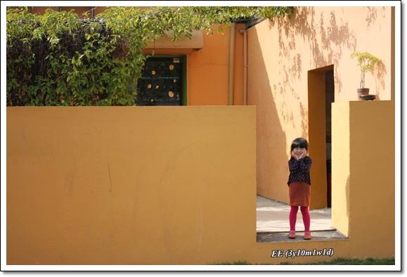 黃矮牆寫真-1