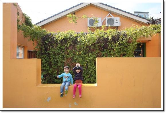 黃矮牆寫真-3