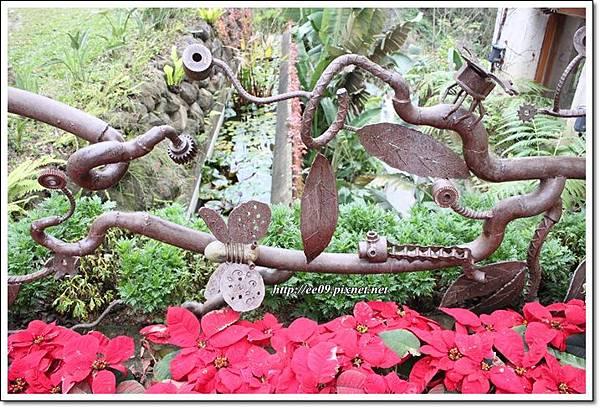 聖誕紅與造型鐵管