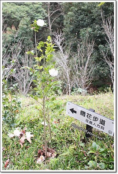 櫻花步道指標