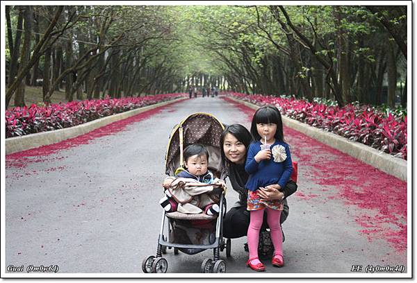 母子女兩排樹美景中
