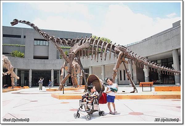 兩寶與中庭恐龍化石