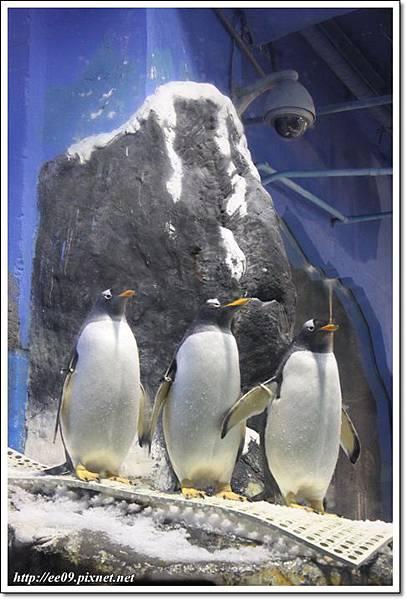 三隻企鵝.JPG