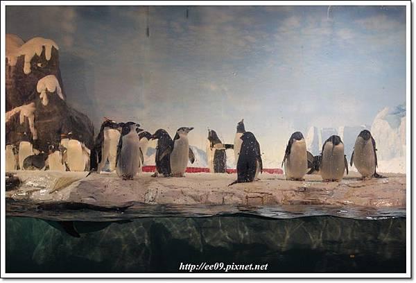 成排企鵝.JPG