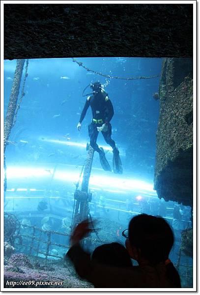 看到潛水人.JPG