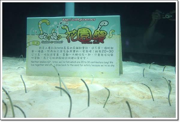 花園鰻.JPG