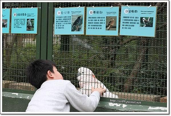 大鸚鵡.JPG