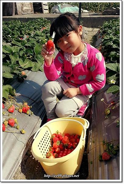 EE剪草莓.jpg