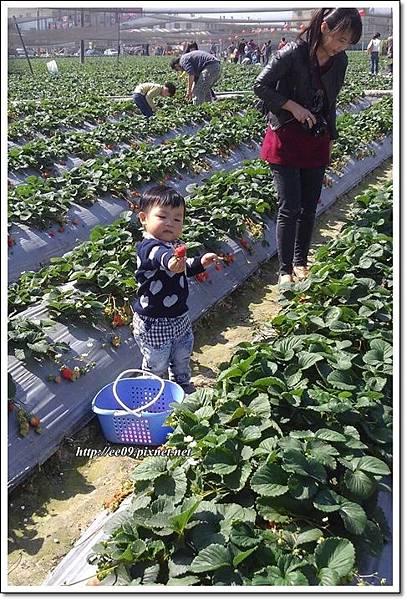 乖乖拿起草莓媽在旁.jpg