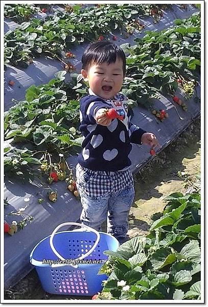 乖乖張嘴看草莓.jpg