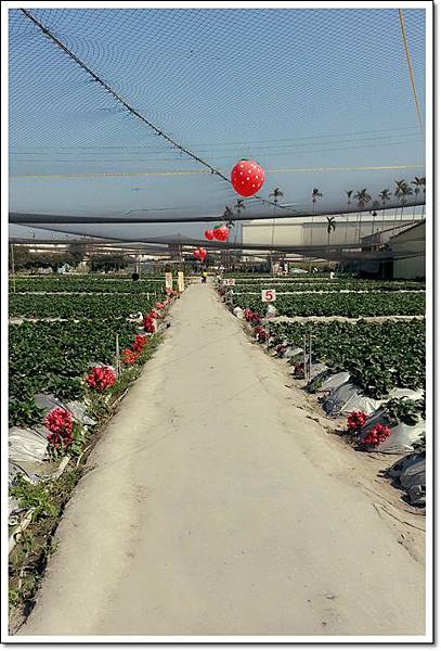 草莓園.jpg