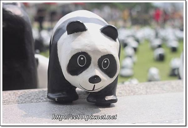 0830快閃貓熊-9.JPG