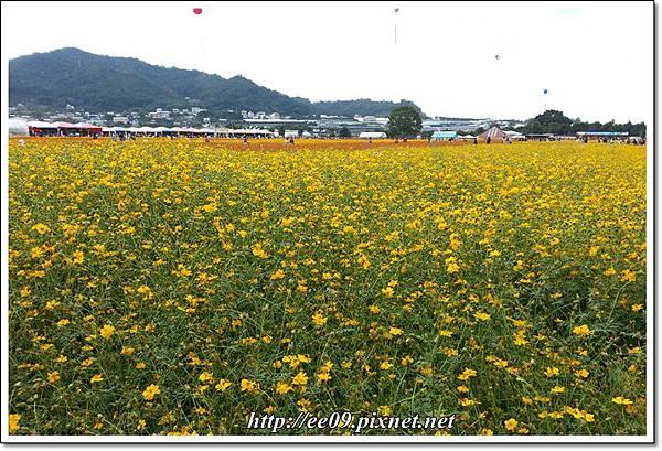 花海-6.jpg