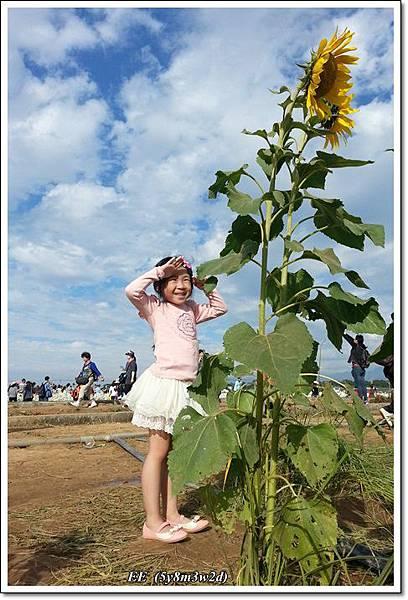 花海-9.jpg