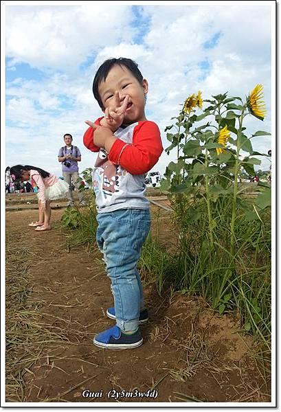 花海-10.jpg