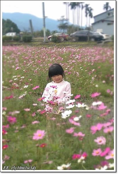 花海+落葉松-2.jpg