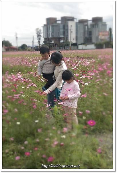 花海+落葉松-4.jpg