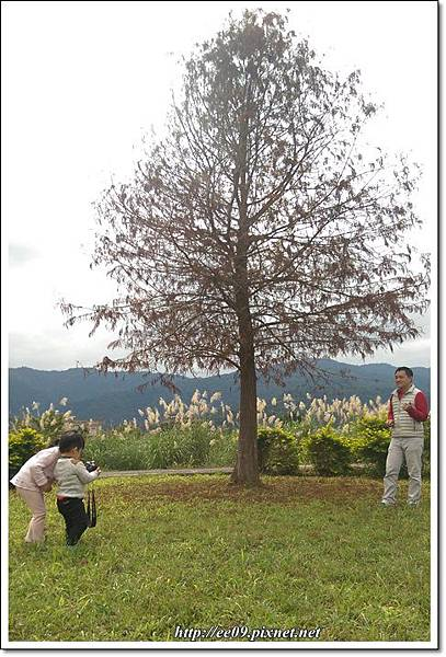 花海+落葉松-15.jpg