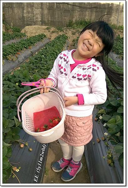 6EE採草莓.jpg
