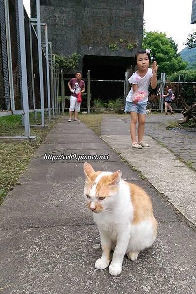 0620貓2.jpg