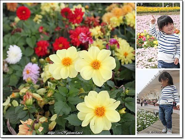 花兒與EE兩圖.jpg