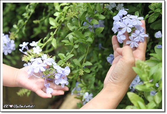 母女觸花.jpg