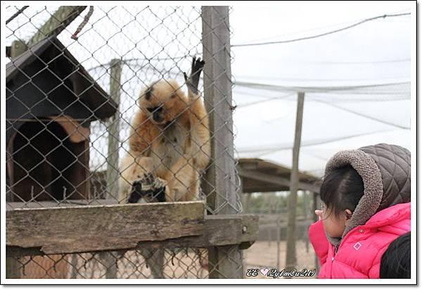 看猴子.JPG