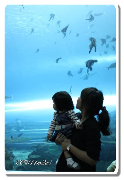 看魚.jpg