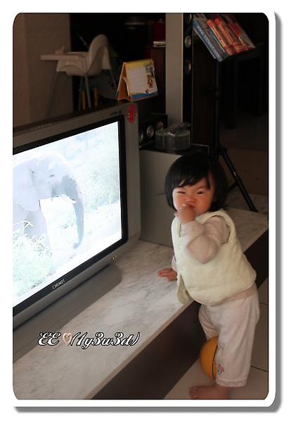 看巧虎學大象.jpg