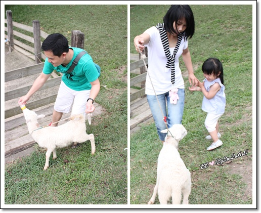 E拔餵羊喝奶EE怕羊.jpg