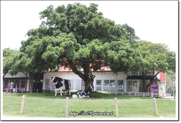 大樹下有假牛.jpg