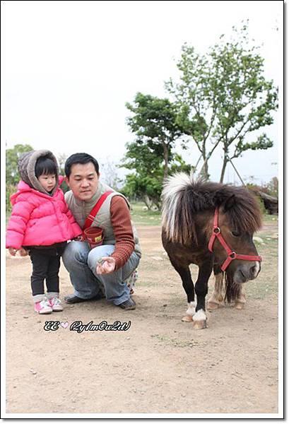 拔與E想餵小馬.JPG