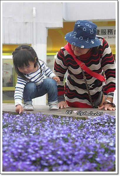 與阿嬤看花.jpg