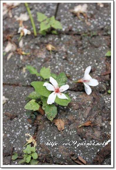 地上的花兒.jpg