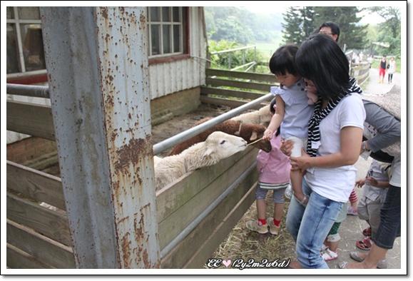EE餵羊吃牧草.jpg