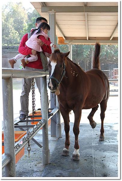 摸馬廄裡的馬.jpg
