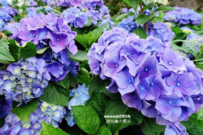 DSC05122_副本.jpg