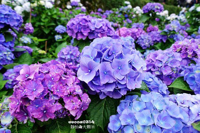 DSC05135_副本.jpg